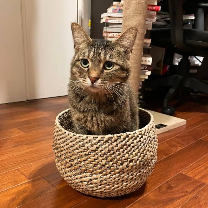 カゴにひとり取り残されてさみしそうな猫・がんくん