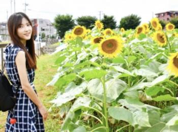 【50万本のひまわり畑】梅雨明け!開けた場所で夏を感じよう