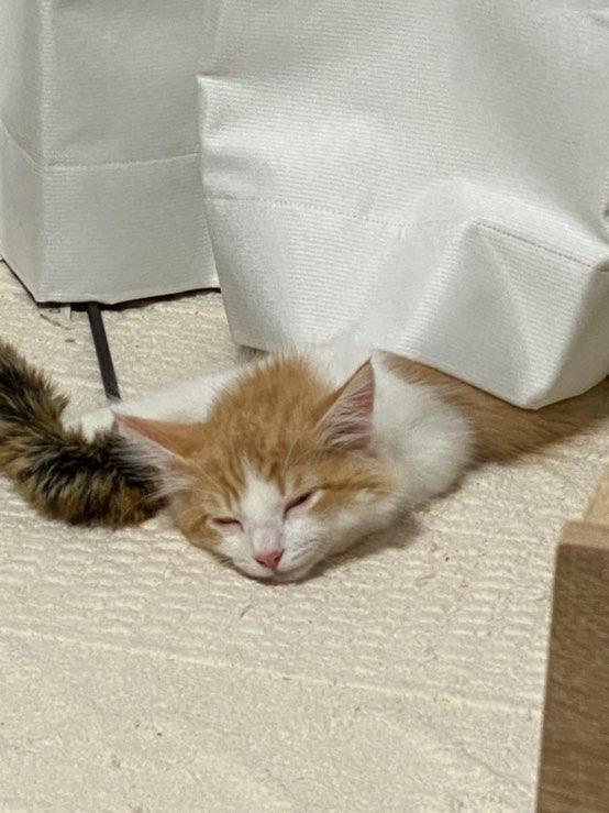 【ペット】うちの猫が可愛すぎる_4