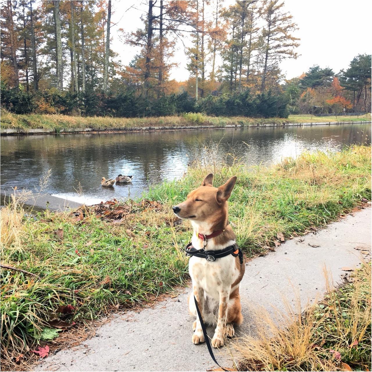 【今日のわんこ】自然の美しさにうっとり♡ こだまちゃん軽井沢にいく!_1