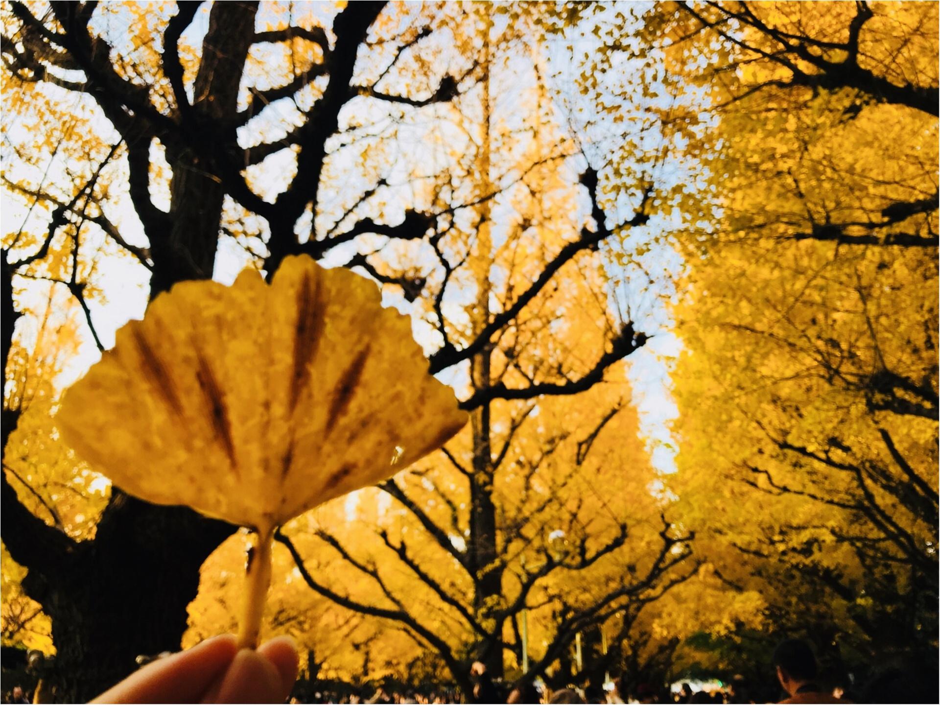 【紅葉スポット】美しすぎる黄色のトンネル《神宮外苑イチョウ並木》今が見頃です♡_3