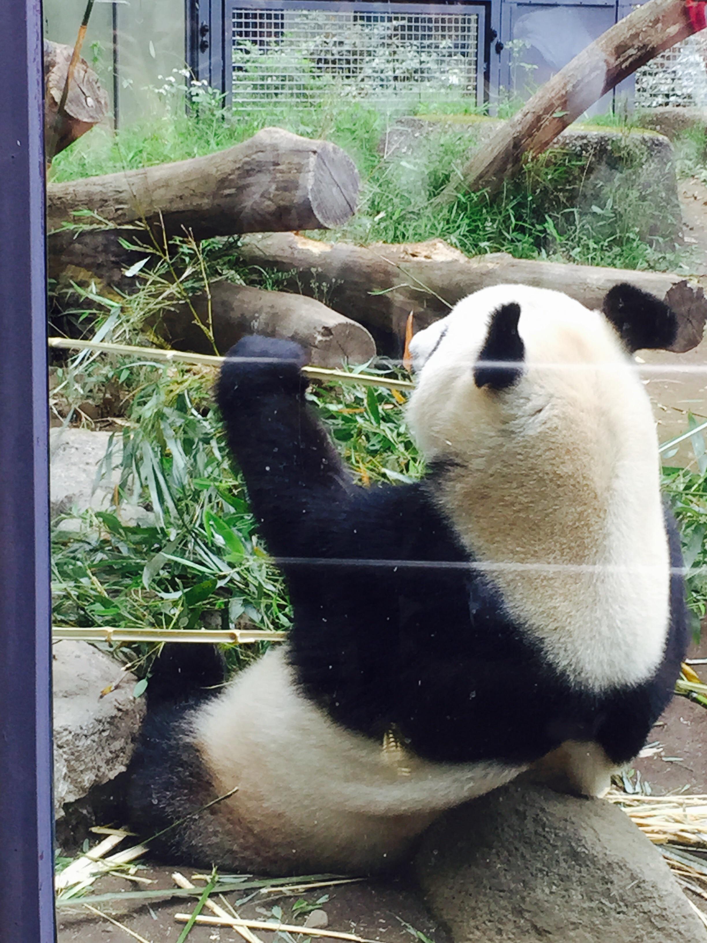 鳥獣戯画展が休みだったーーー。からの、パンダ♡_3