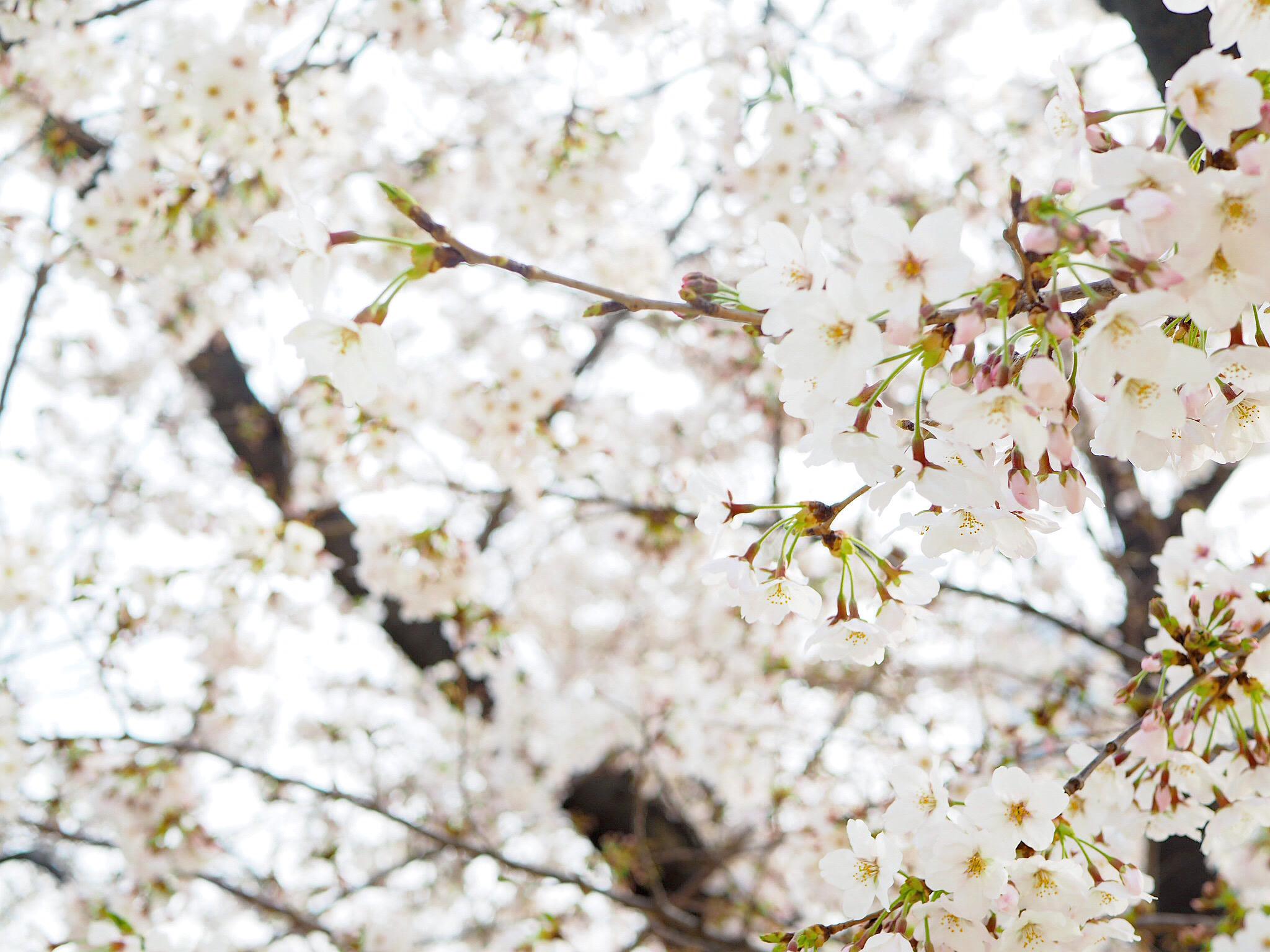 《nano・universe》の春色ワンピをお得にGETしました❤︎_1