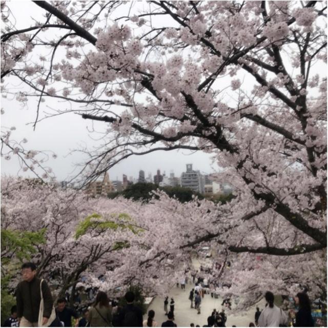 《公園はしご旅》in 福岡 今が見頃!とっておきの桜スポットをご紹介!!_2