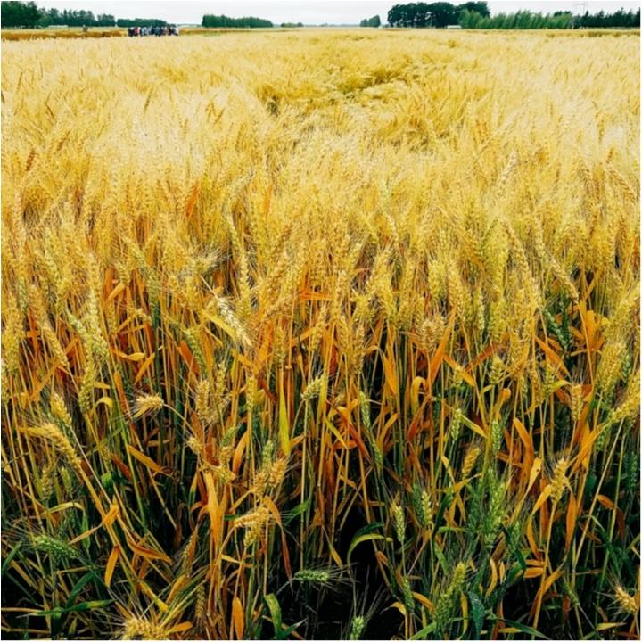 メロン、うに、かに、ほたてといえば?(笑) 小麦研修&グルメ旅【#モアチャレ 農業女子】_1