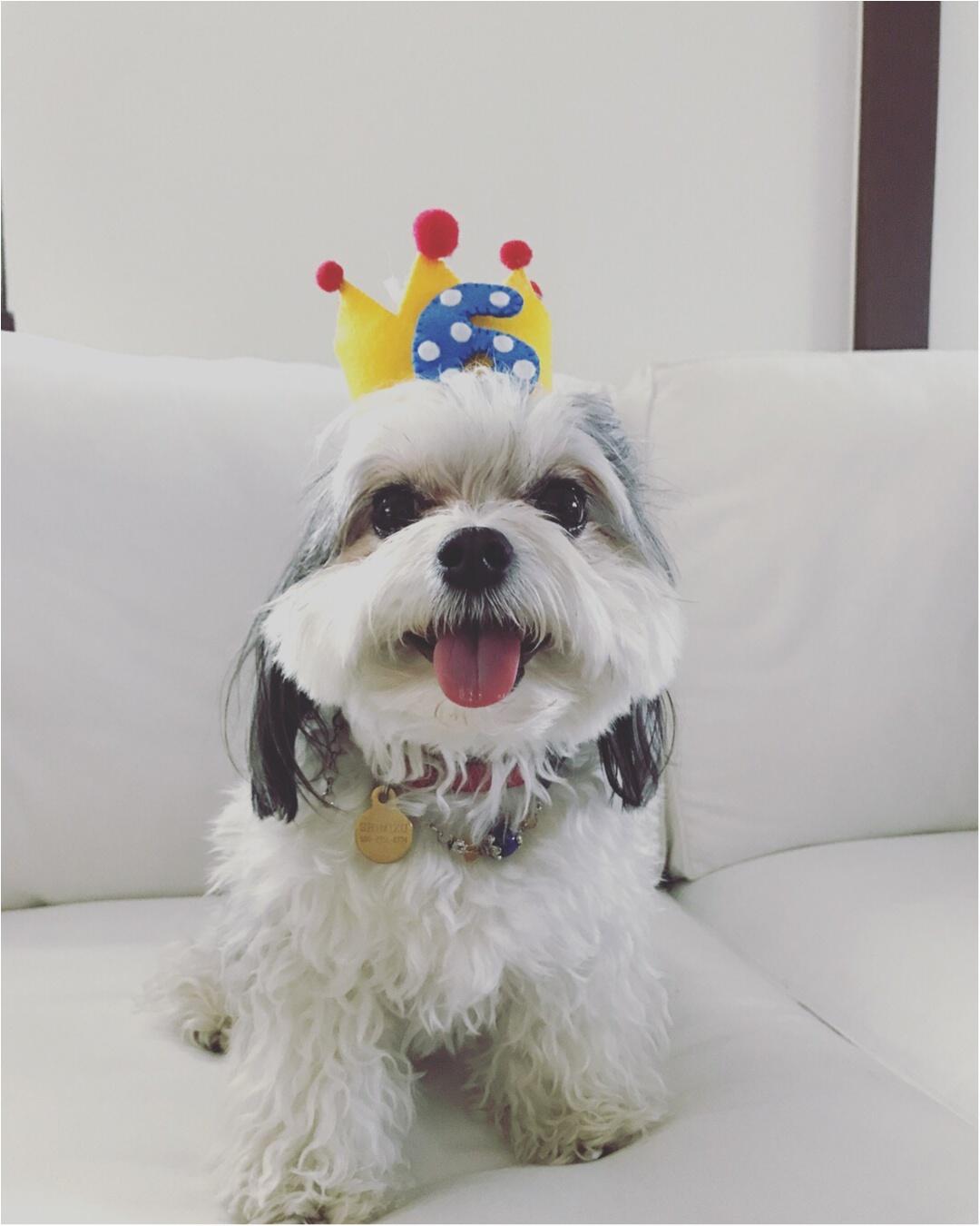【今日のわんこ】ハッピーバースデー! 誕生日をお祝いした太郎くん_1