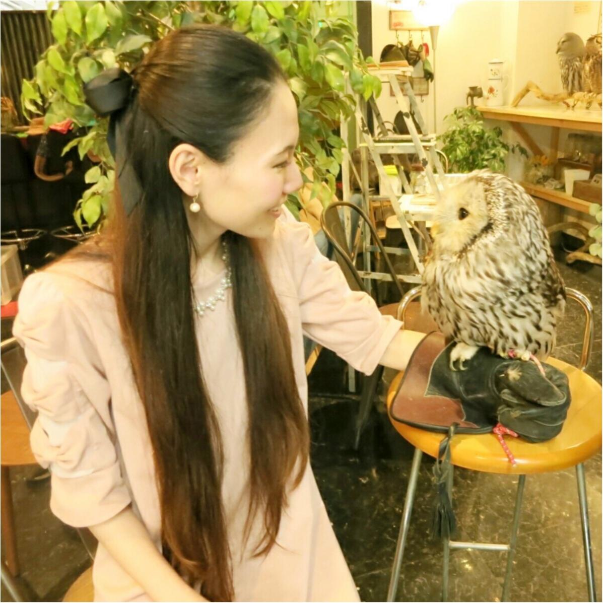 フクロウと触れ合える♡ 癒しのフクロウカフェが大人気!_7