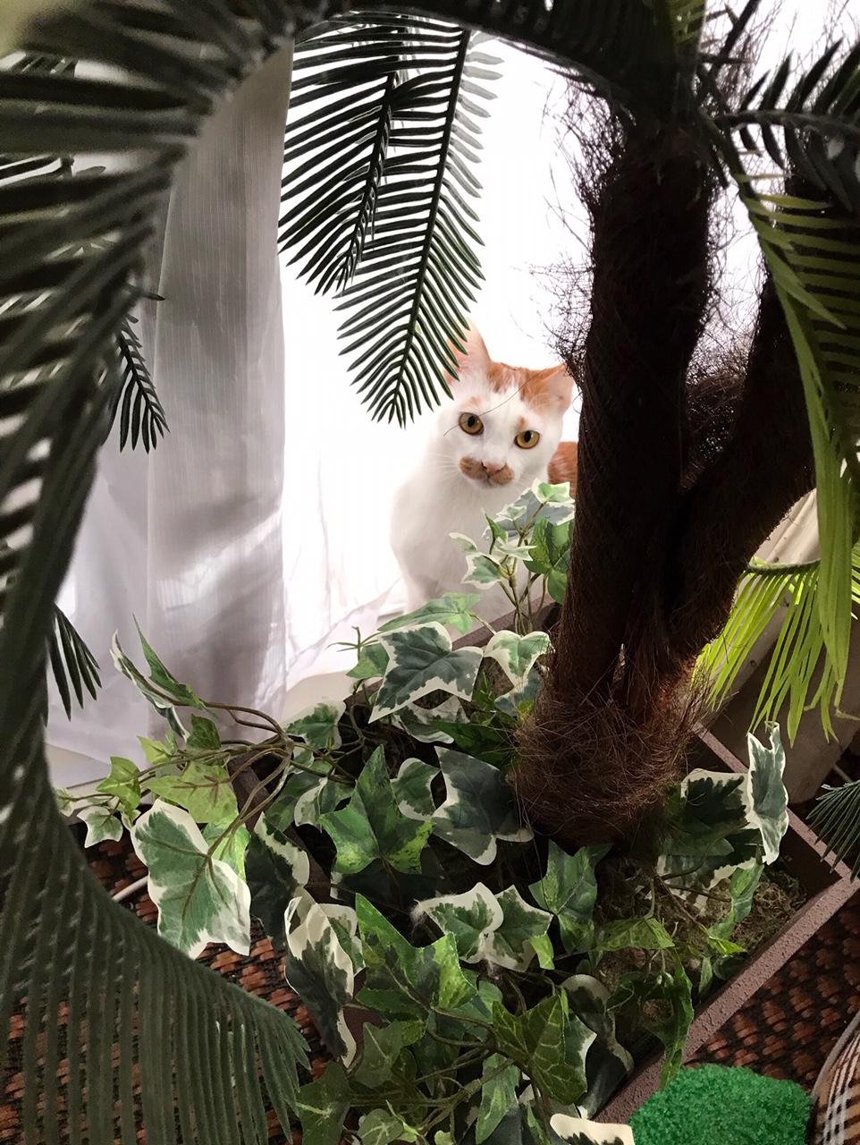 【今日のにゃんこ】植物に興味津々なラビくん☆_1