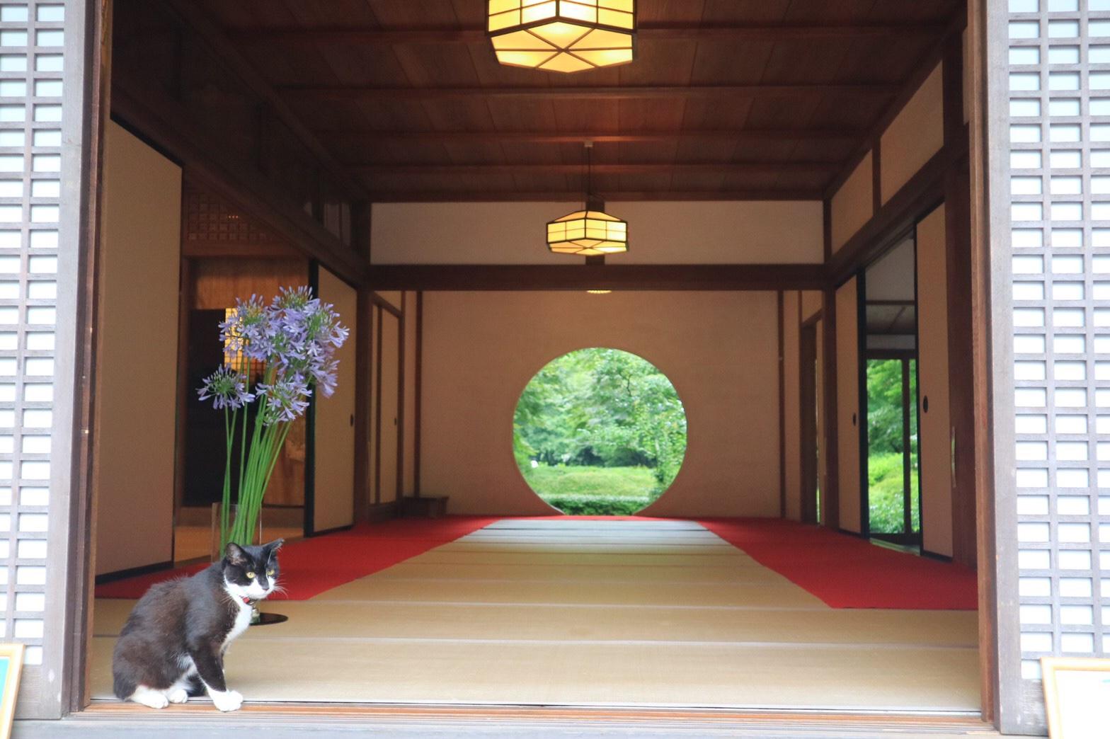 夏着物で鎌倉女子旅♡  紫陽花がとっても綺麗でした♡_20