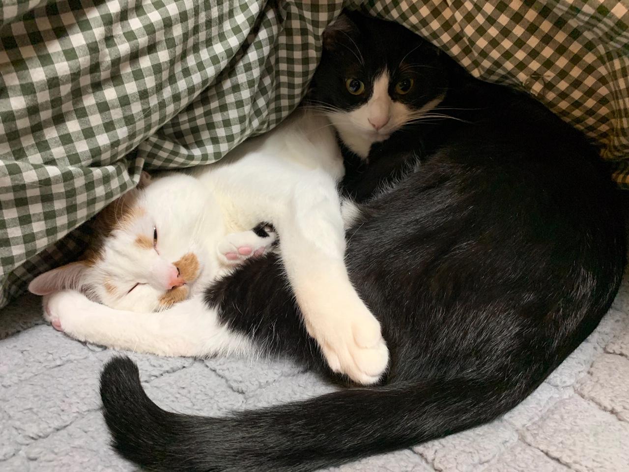 寝室で毛布に埋もれるルウくんとラビくん