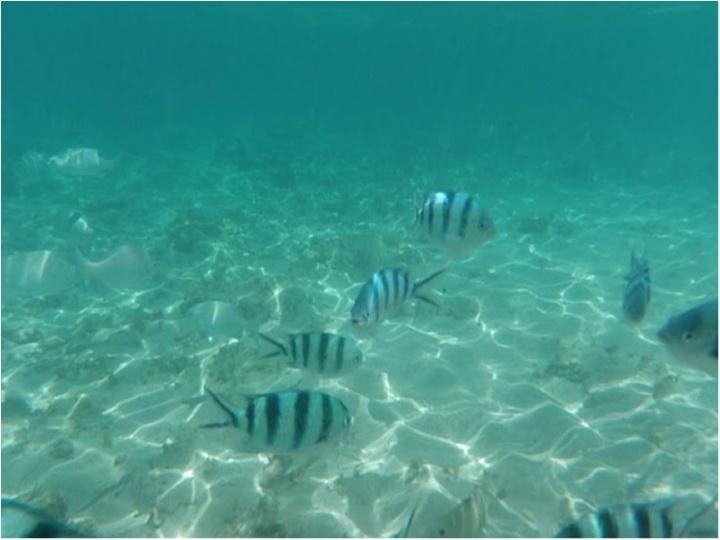 在住歴2年のわたしがオススメする沖縄の魅力♡地元民しか知らない絶景の海★_6