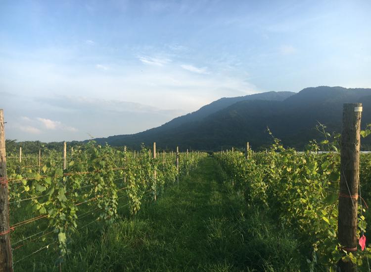 【女子旅におすすめ】ワイン好きさん必見♪葡萄畑を眺めながらゆったりワイナリーステイ♡_12