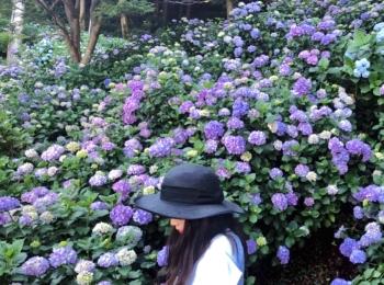 【#静岡】シーズン真っ只中♡4000株の満開のアジサイが可愛すぎる癒し空間へ行ってきました❁