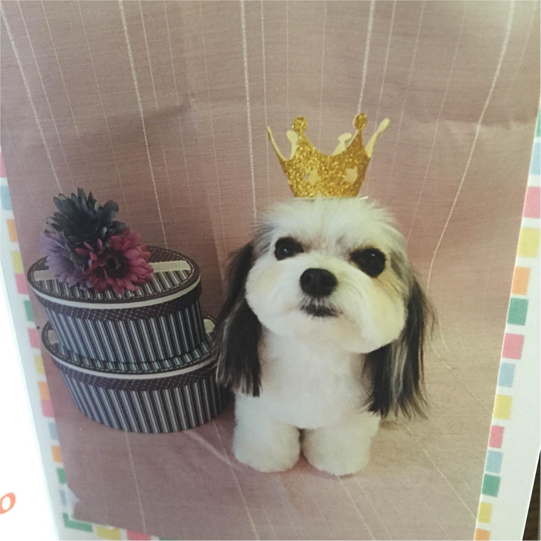 【今日のわんこ】癒しの国の王子さま! 太郎くんの仮装が可愛すぎる♡_1