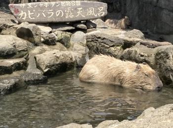 ヒルナンデスでも紹介!伊豆シャボン動物公園で動物達と沢山触れ合える!