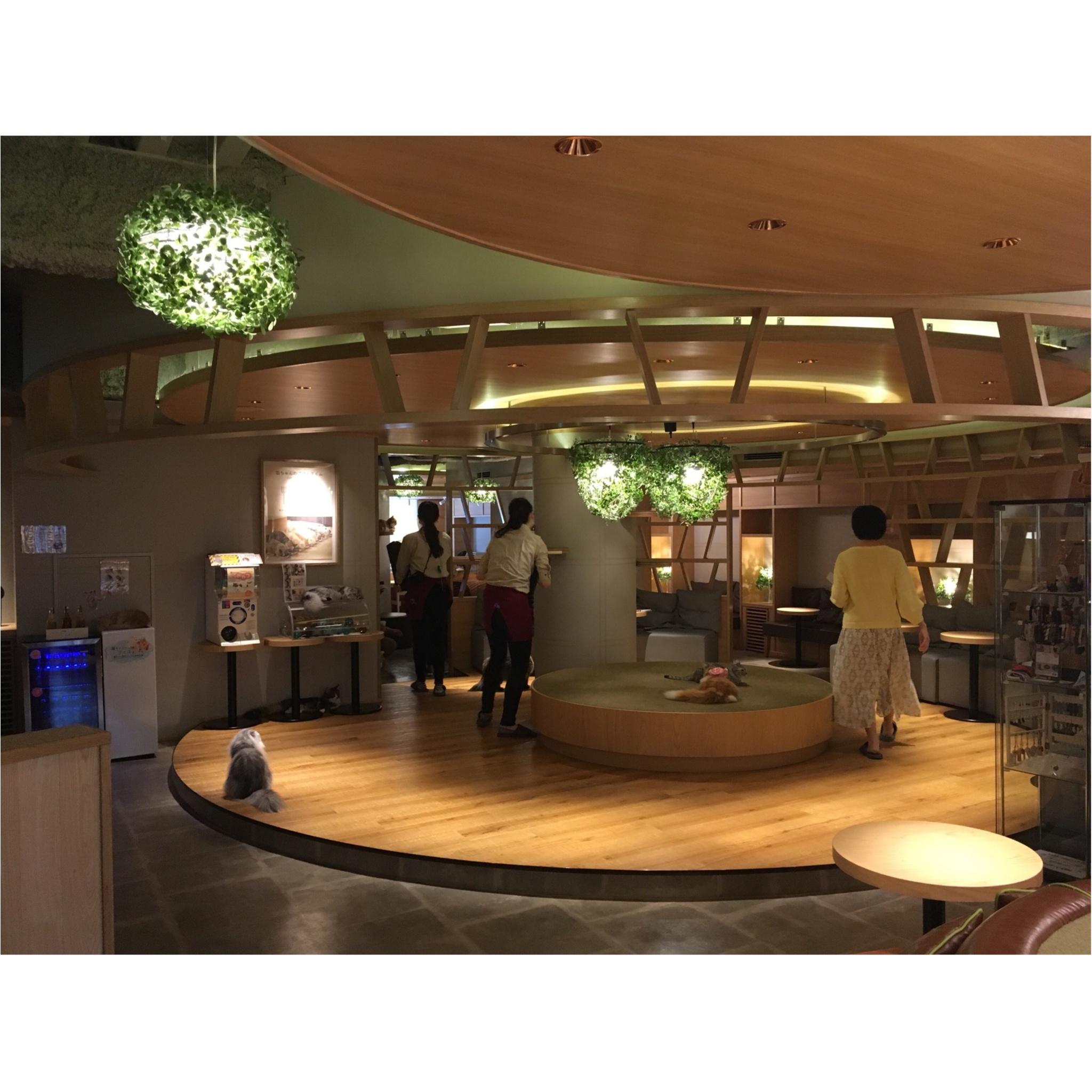 【GWはここで決まり!】日本最大級の猫カフェが新宿に⁈オシャレなラウンジカフェで可愛い猫たちに癒される!_2