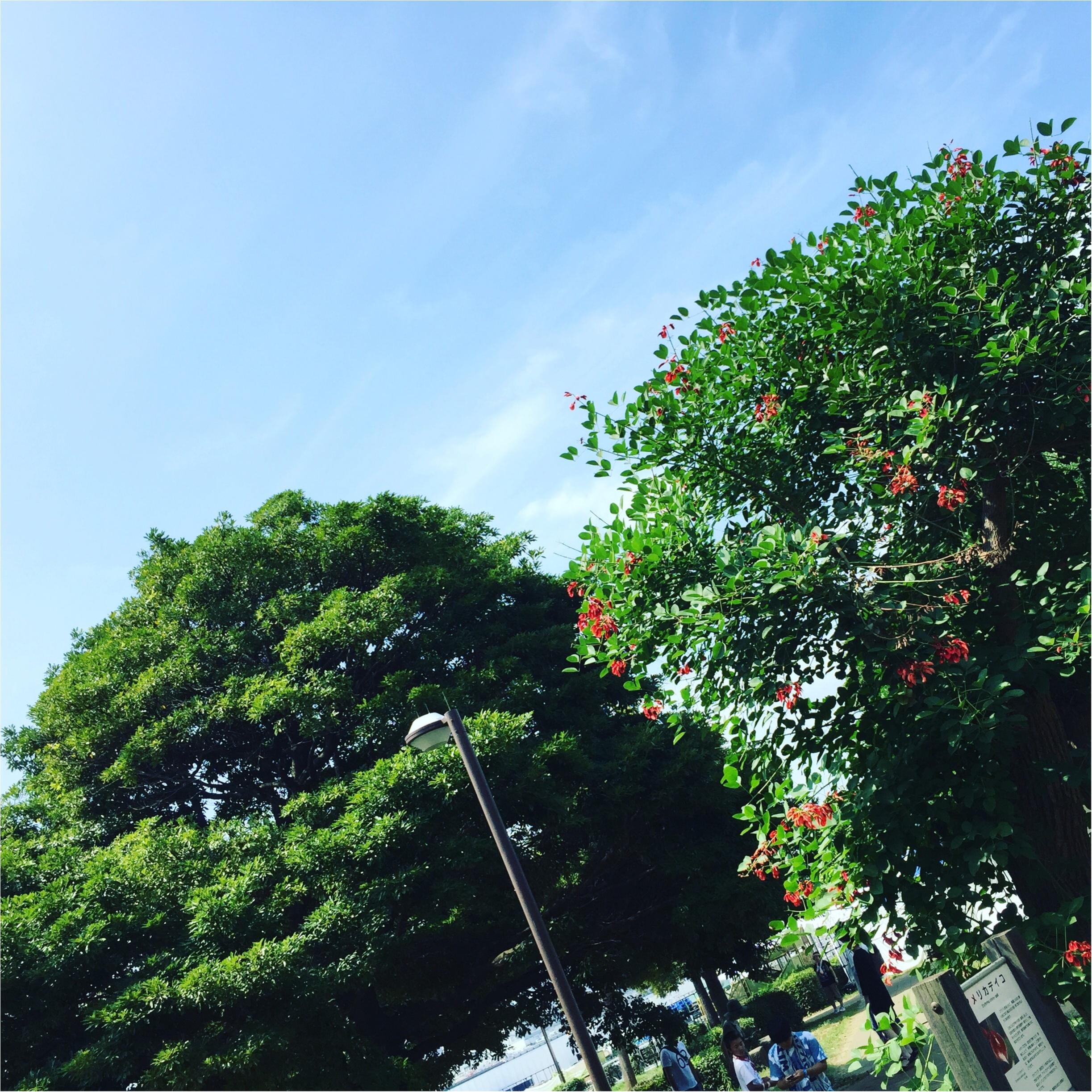 夏の記憶が蘇る✨✨この夏の《*空の写真*》_8