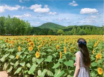 美しい夏の絶景♡ 100万本のひまわりが一面に広がる『ひまわり畑』が見たい♡♡