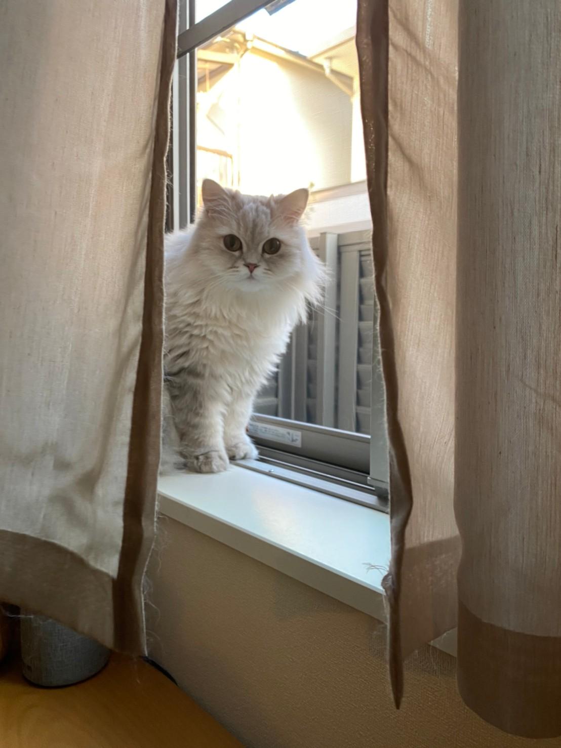 ニャルソック中の猫・ココンちゃん