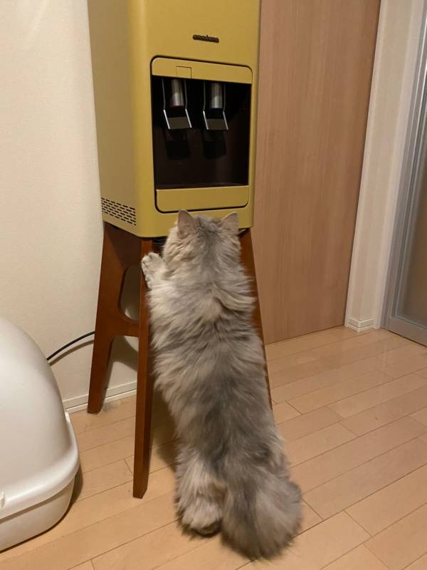 ウォーターサーバーに興味津々な猫・ココンちゃん