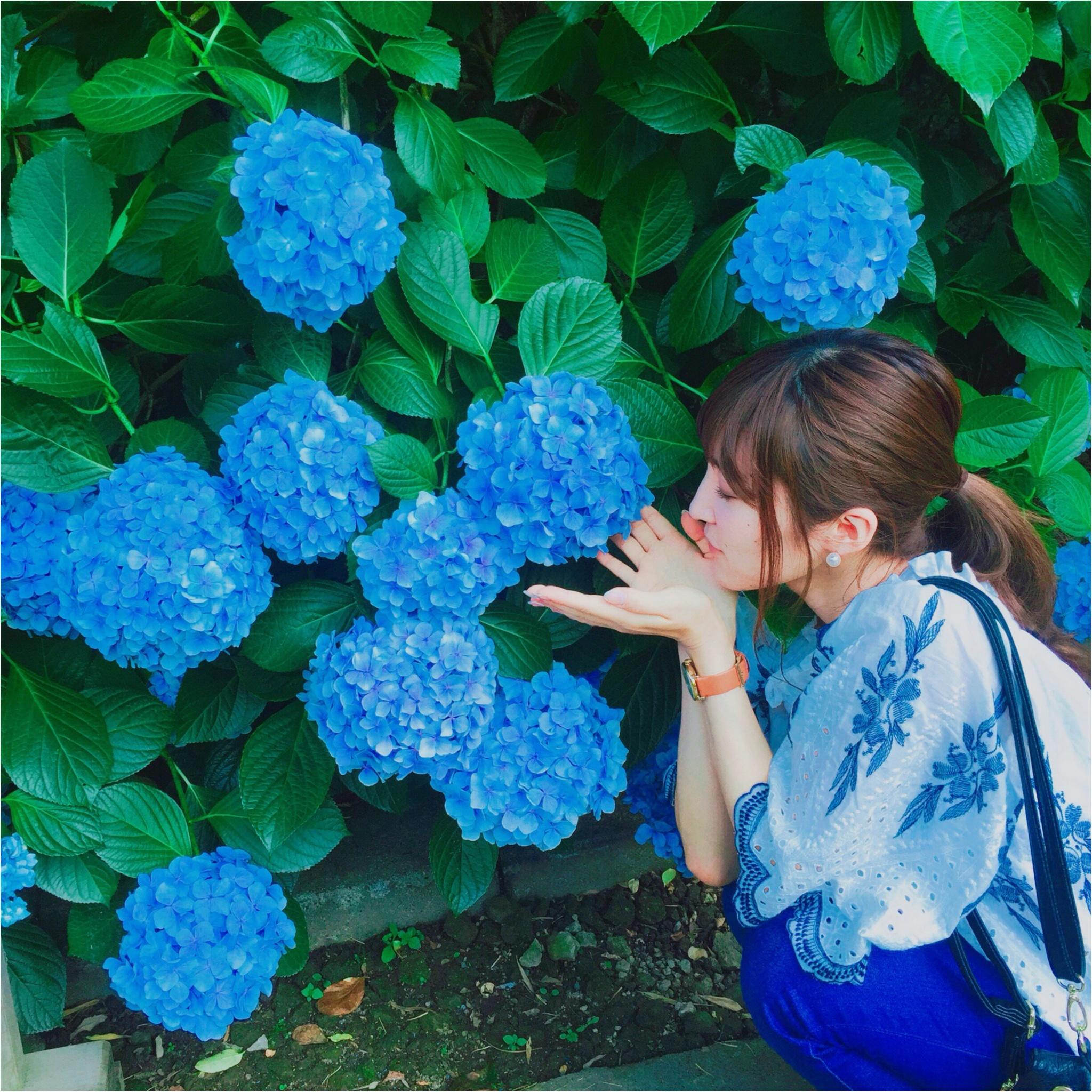 <紫陽花だらけのお寺?!>写真映え間違いなしの「明月院」とは…☻_1