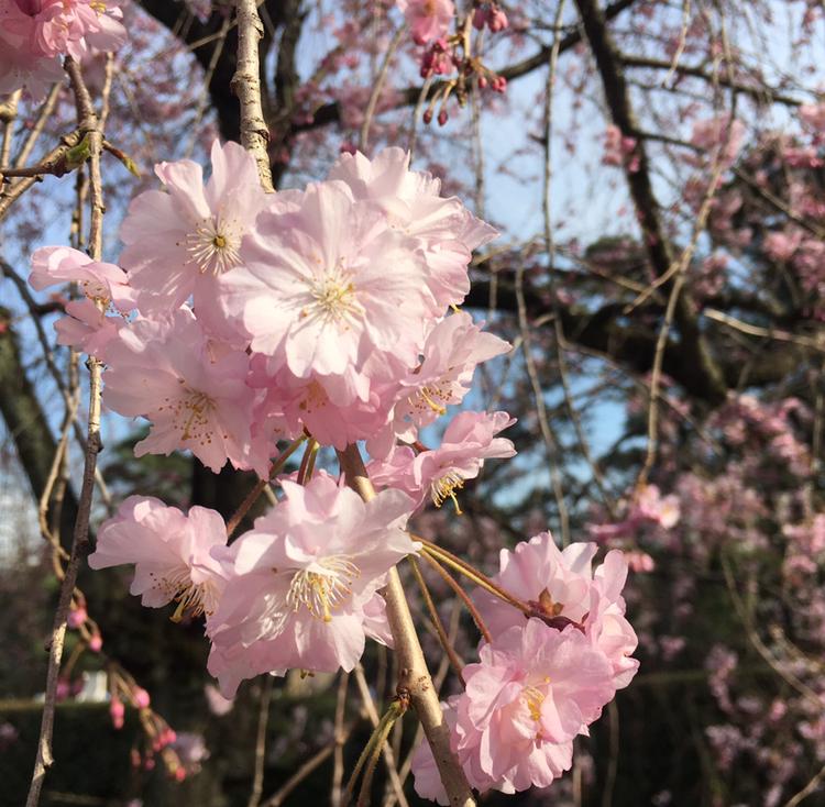 【ヘアオイル】話題の《N.(エヌドット)》のポリッシュオイルで春の軽やかヘアを先どり♡_1