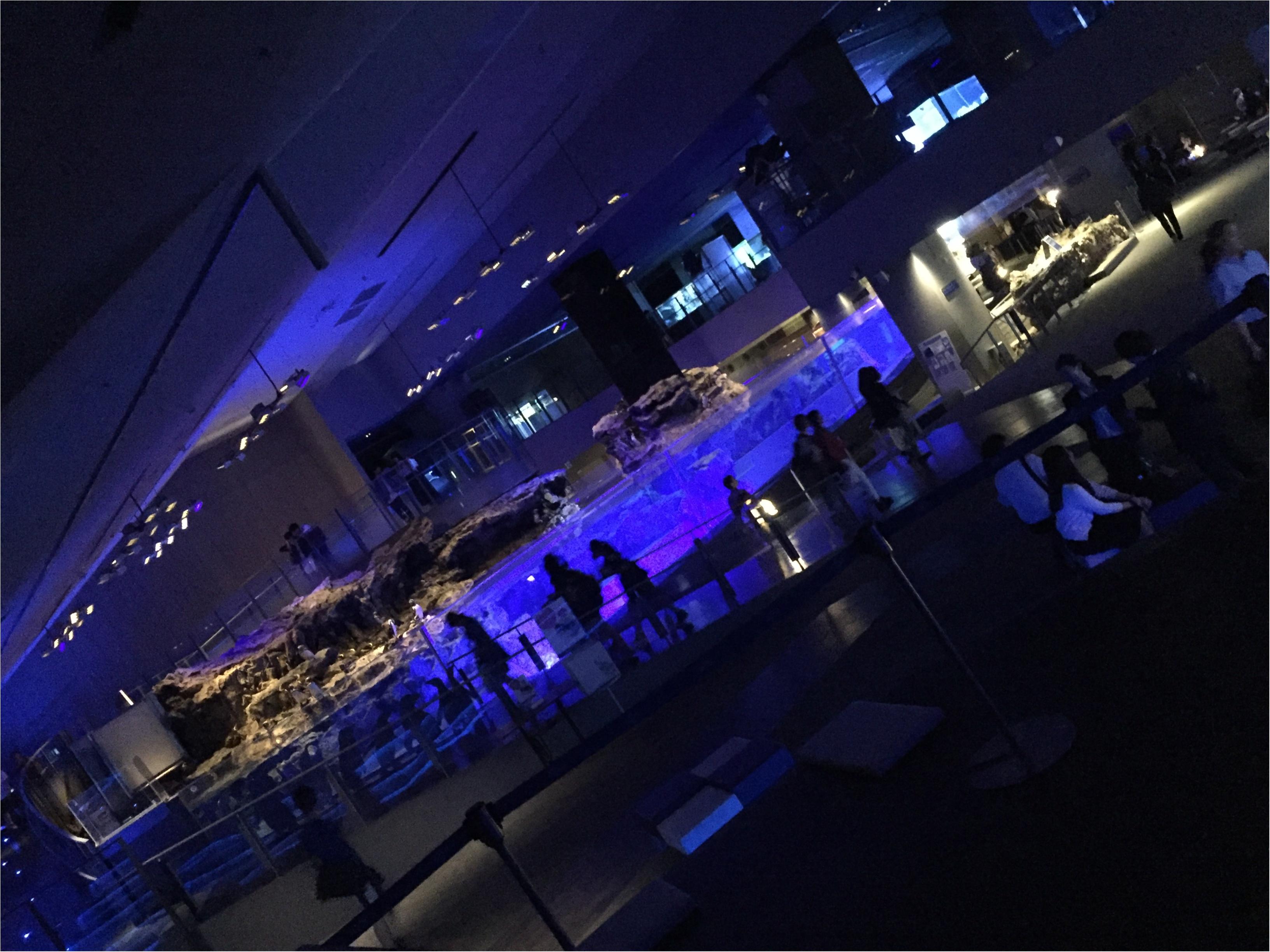 【6/18まで】すみだ水族館のスペシャルコラボ✨期間限定『ほたるの夜』でロマンチックな夜を♪♪ _4