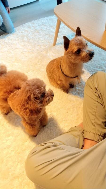 【今日のわんこ】テテちゃん、お友達のソラちゃんとおやつを待っています_1