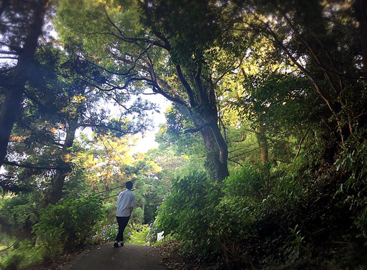 【#静岡】シーズン真っ只中♡4000株の満開のアジサイが可愛すぎる癒し空間へ行ってきました❁_5