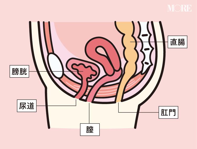 """膀胱炎、尿モレ、頻尿etc. 20代女子にも多い""""小""""にまつわる不快感や疑問にお答えします!【デリケートゾーンの話第四夜】_1"""