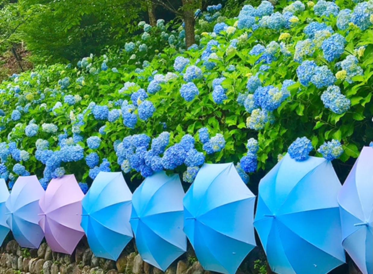 【風鈴×あじさい×傘】 風物詩が詰まったインスタ映えスポット 尊永寺①_9