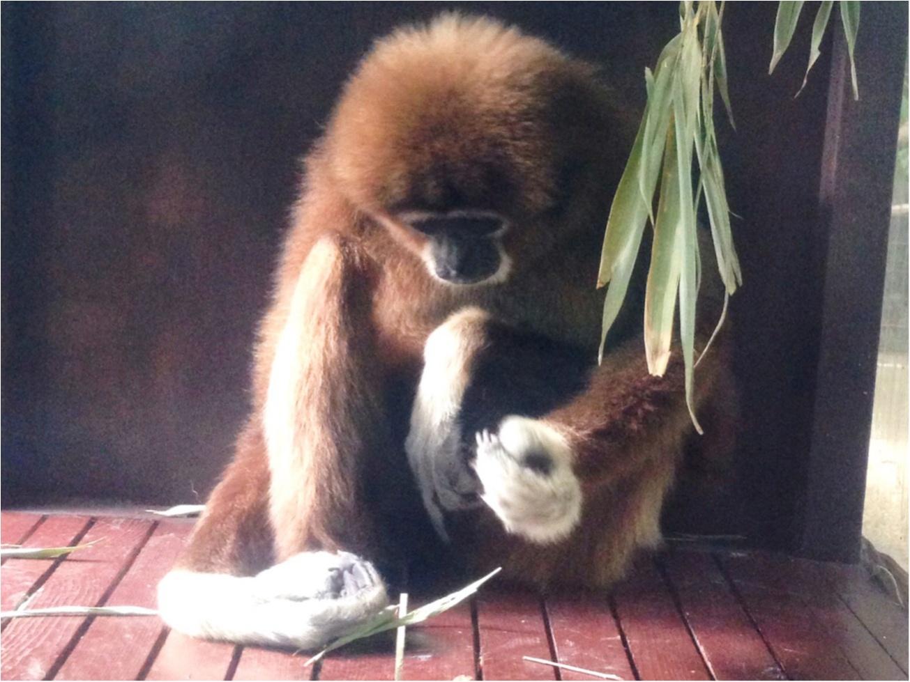 【上野/シャンシャン公開記念❁】上野駅・駅ナカでGETできるパンダグッズがとってもキュート♡♡_6