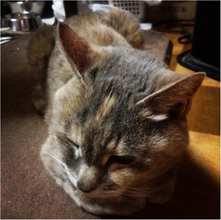 猫好き集まれっ♡ 今日のにゃんこ✳︎モアハピver♡_2