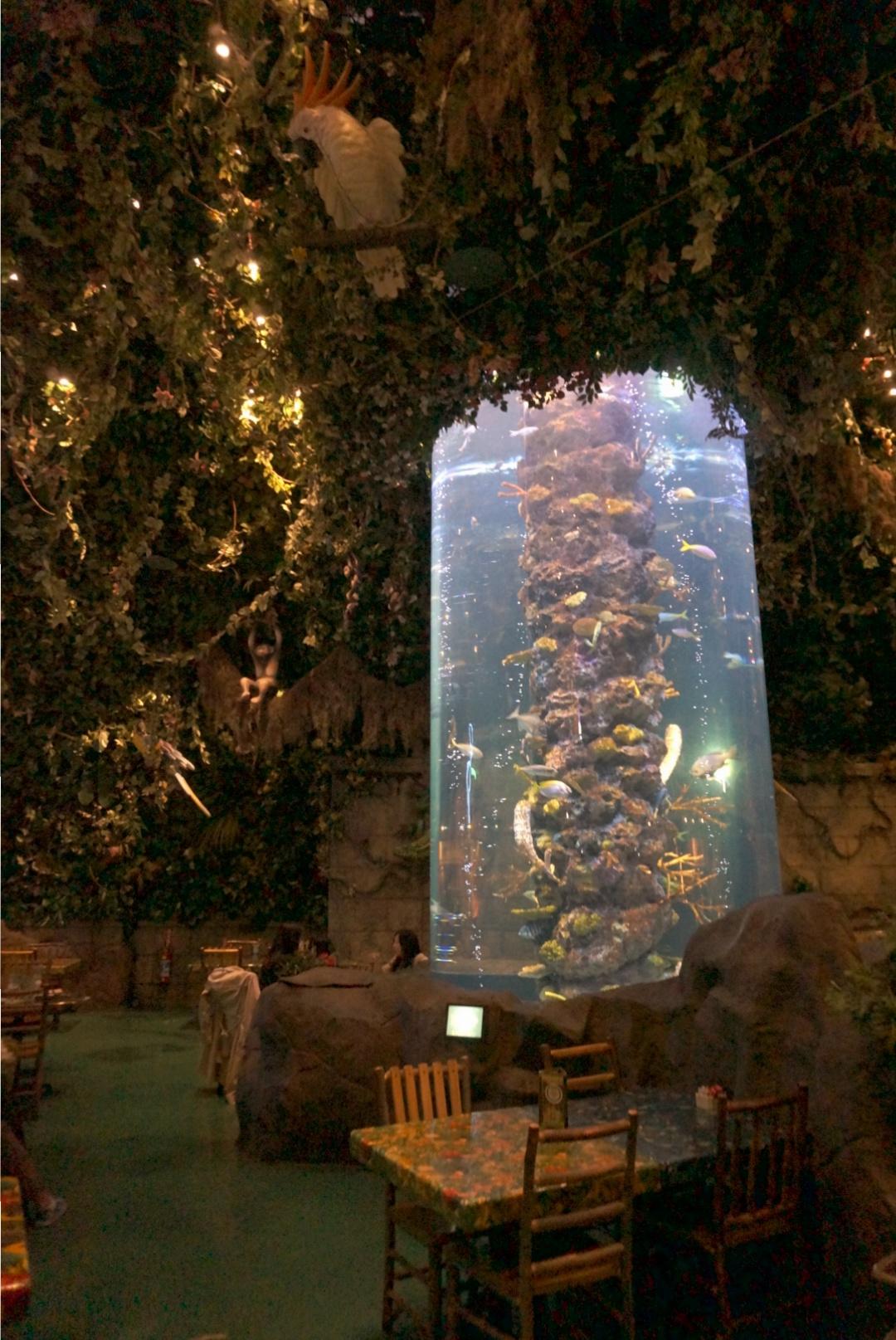 """まるで """" ジャングル """" みたい‼︎熱帯雨林と野生動物の保護をテーマにしたレストランが凄い✨ここでサプライズバースデーはいかが(*´∀`*)?_5"""