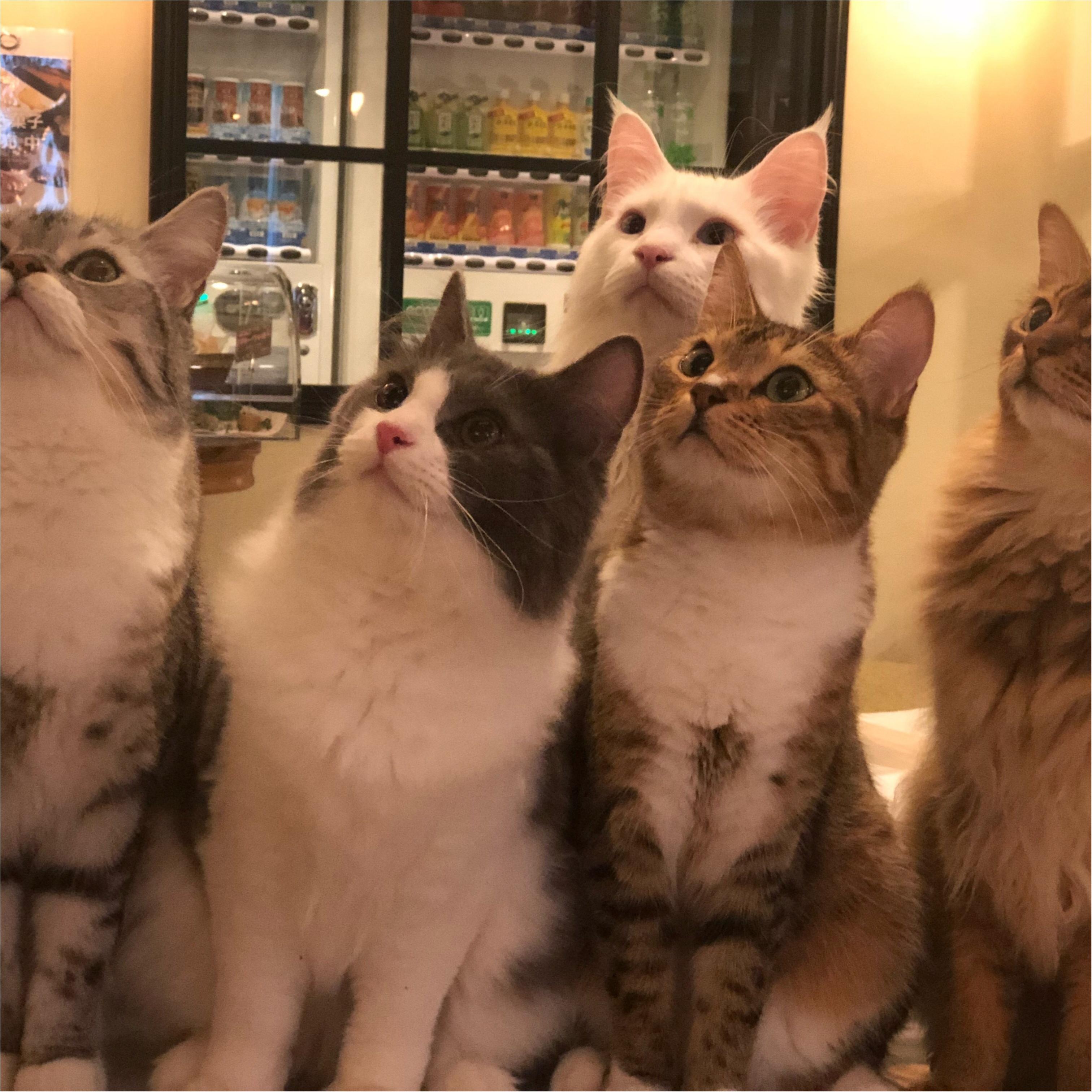 ねこたんとたわむれたい方必見!!【綺麗すぎる猫カフェ】in池袋_3