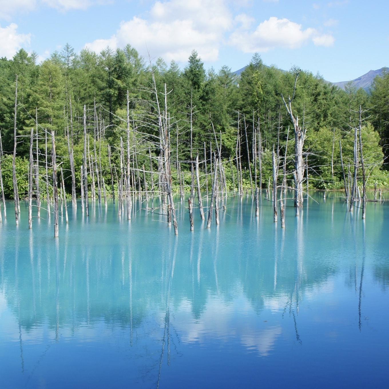 【女子旅におすすめ】北海道の絶景スポット❤️青い池とファーム富田☻_1