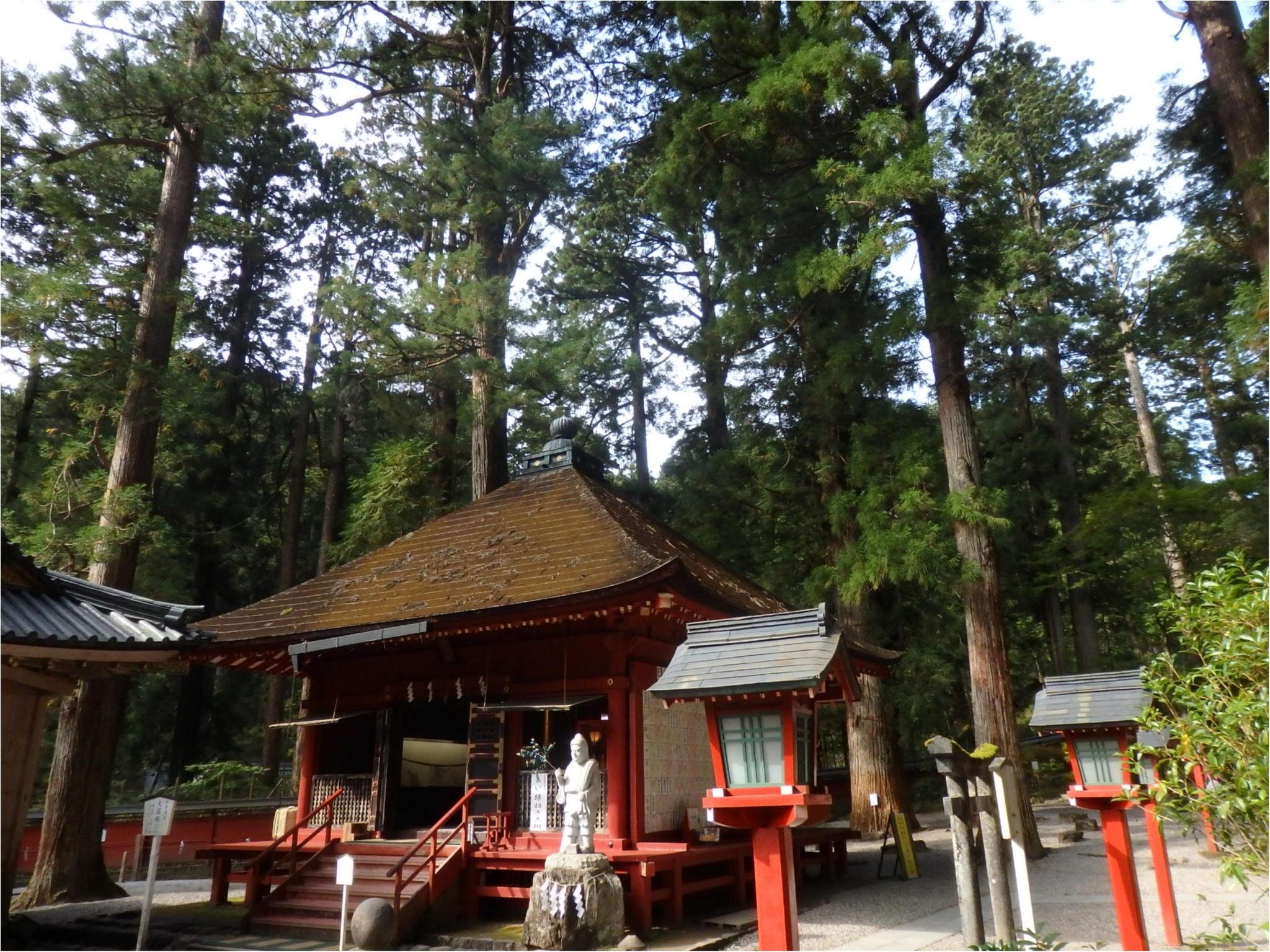 【知らなかった!】日本一楽しめる神社へ潜入してみた_34