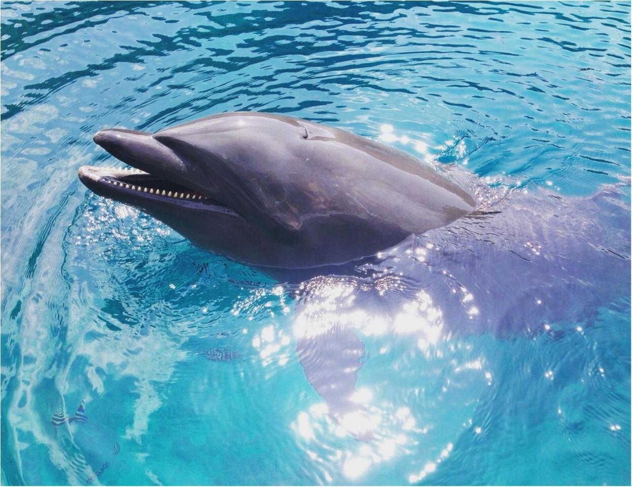 【travel】パラオでイルカに乗ろう~死ぬまでにやりたいことの1つ~_3