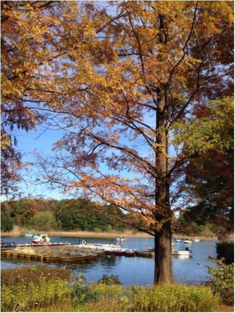 【私がおすすめする紅葉スポット】一度は歩きたい!《イチョウ並木の黄色いじゅうたん》がココにあります!!_1