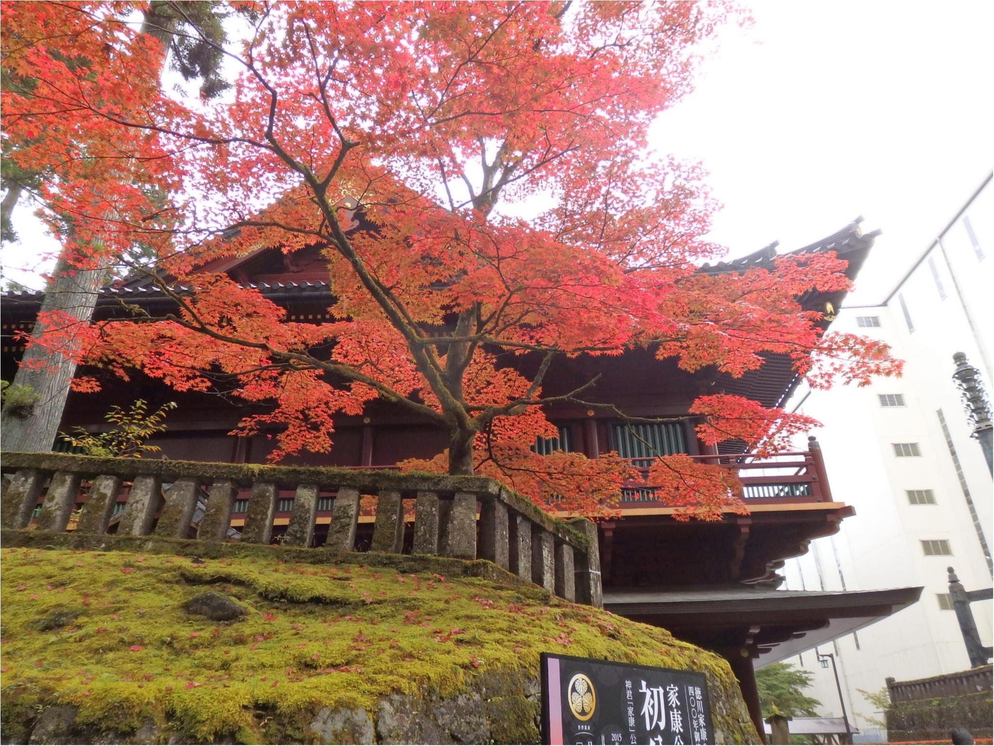 【知らなかった!】日本一楽しめる神社へ潜入してみた_1