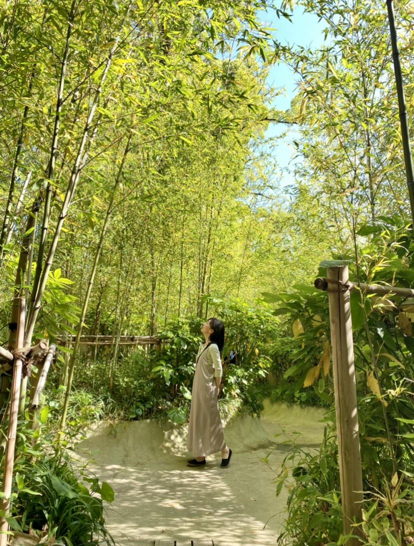 【パワースポット】熱海にある来宮神社で来福祈願_7