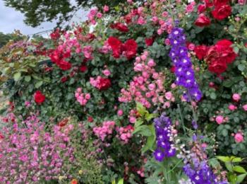 【薔薇満開】あしかがフラワーパークに行ってきました