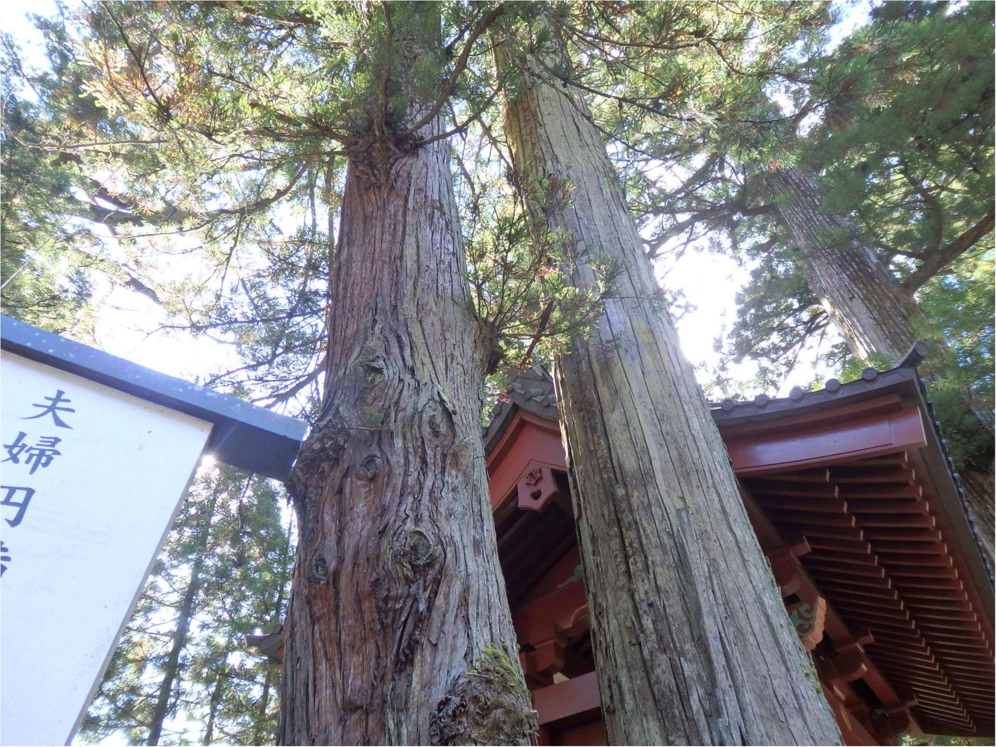 【知らなかった!】日本一楽しめる神社へ潜入してみた_10
