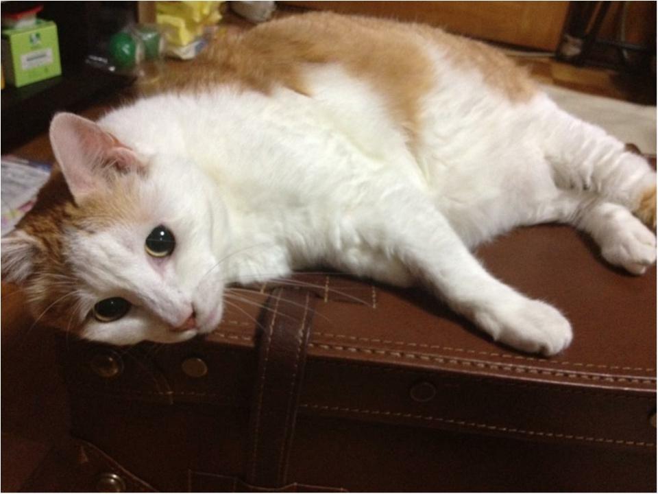 猫好き集まれっ♡ 今日のにゃんこ✳︎モアハピver♡_7