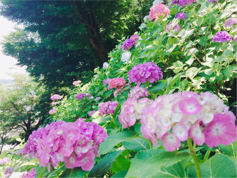 【鎌倉・長谷寺】紫陽花が見頃!待ち時間にオススメのランチスポットをご紹介♡_10