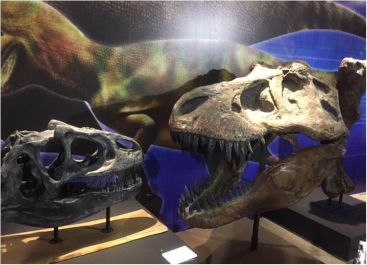【9/3まで】大人も子供も楽しめる!!大迫力《横浜恐竜展2017》で動く恐竜の森を体験♪_6