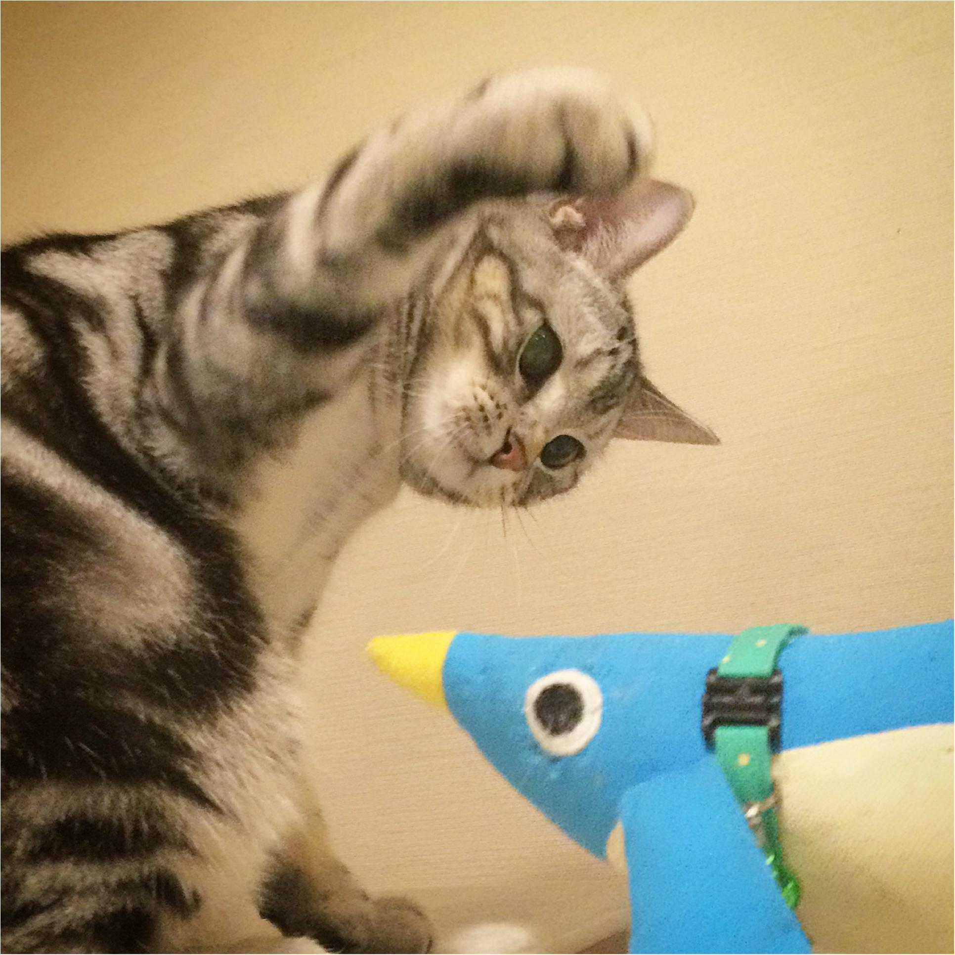 【今日のにゃんこ】もっと強くにゃる! アランくんはペンギン師匠と修行中_1