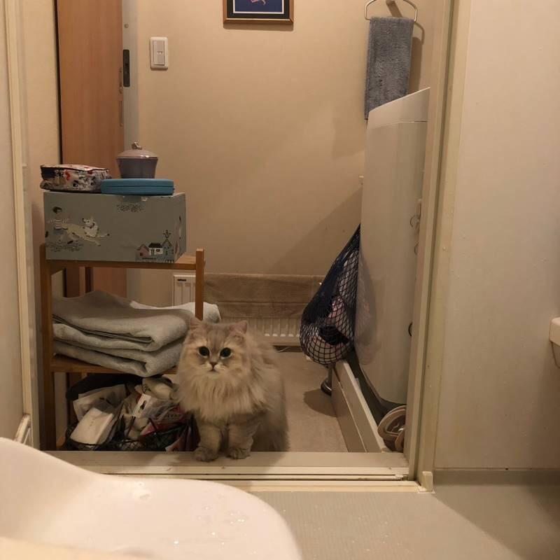 【今日のにゃんこ】お風呂好きなココンちゃん_1