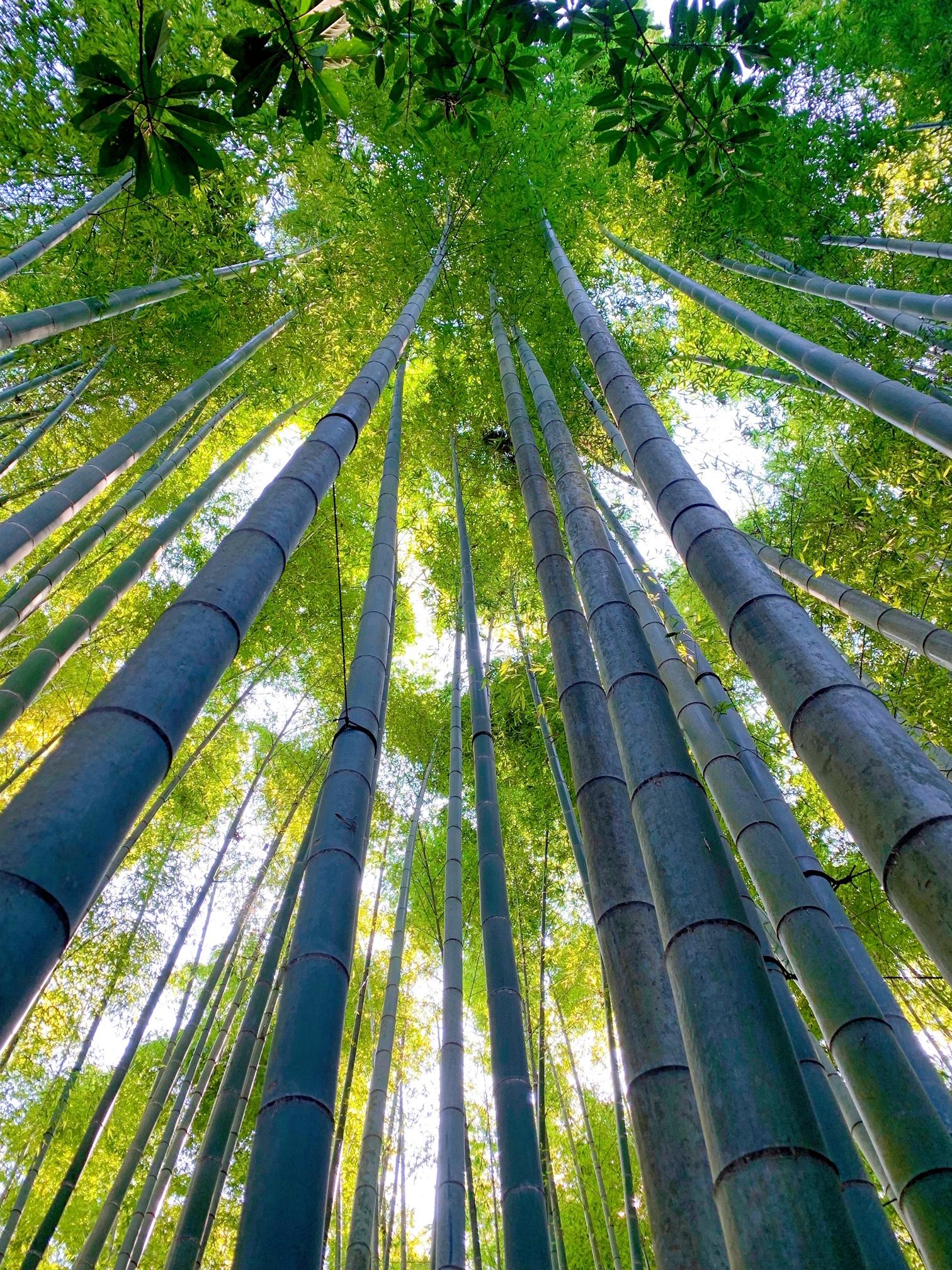 【女子旅におすすめ】神奈川《鎌倉》静かに自然を感じる癒しスポット4選♡_2