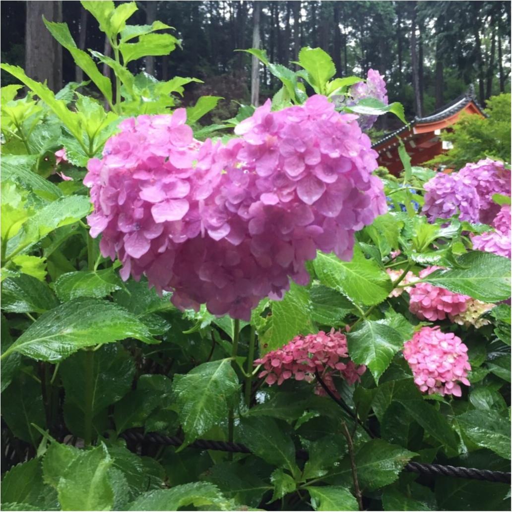 梅雨の時期に見たい♪紫陽花の名所へおでかけ…*見つけたハートの紫陽花♡_10